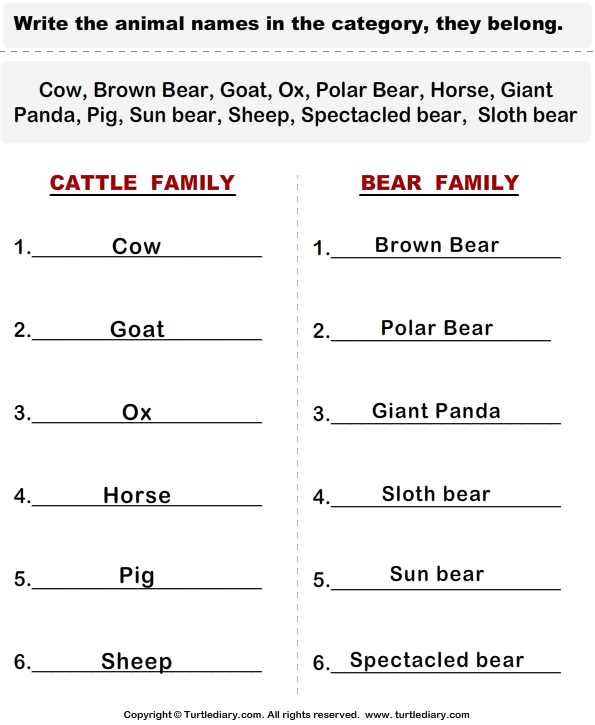 Cattle - Categorize the Animals Answer