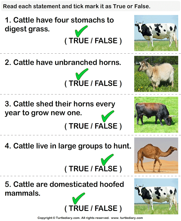Cattle Facts: True or False? Answer
