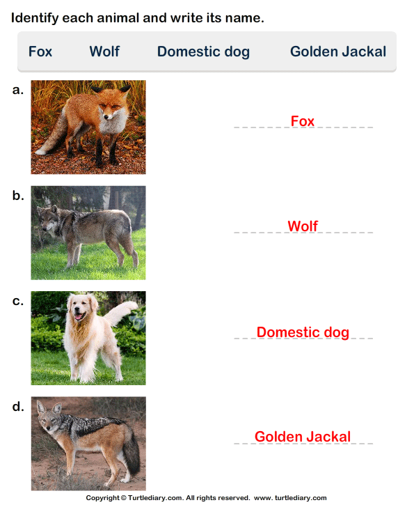 Write the Names of Dog Family Animals Answer