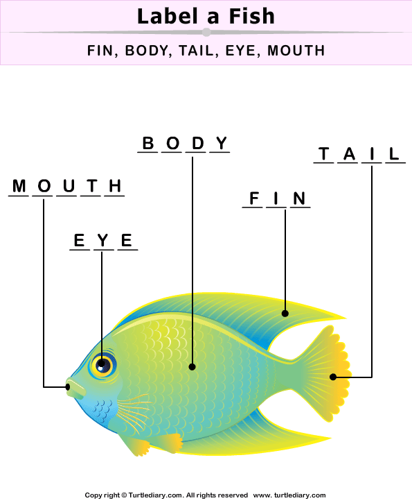 Fish Body Parts Worksheet - Turtle Diary