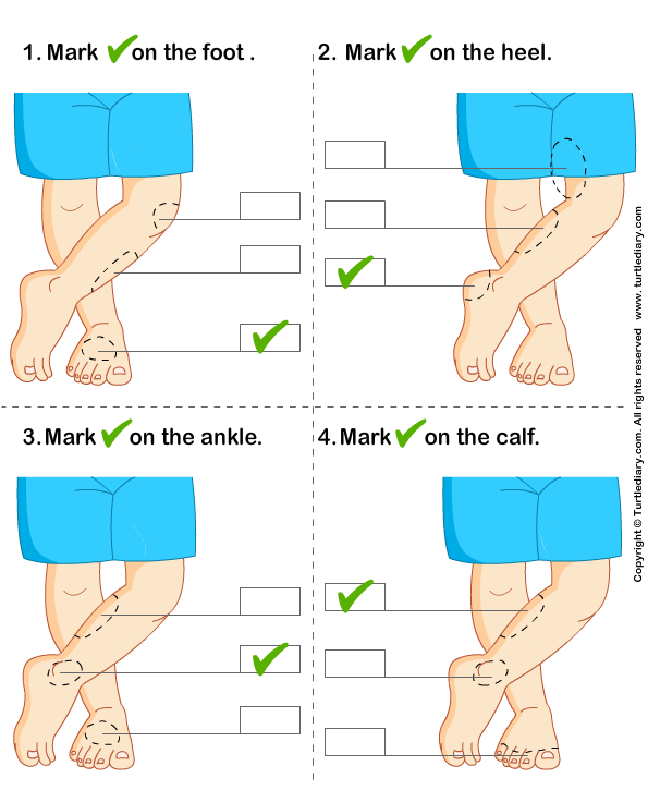 Identify Parts of Human Leg Answer