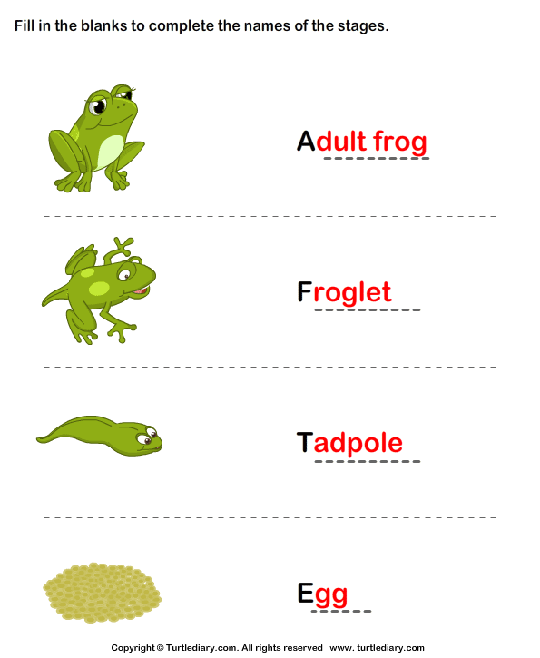 Frog Life Cycle: Complete the Stage Name Answer