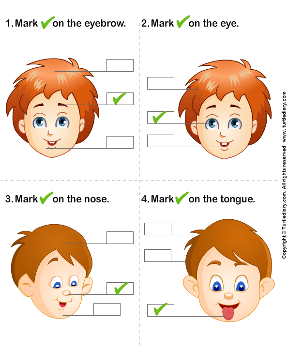 Identify Parts of Human Face Answer