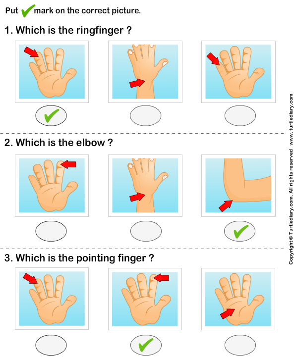 Identify Parts of Human Hand Answer