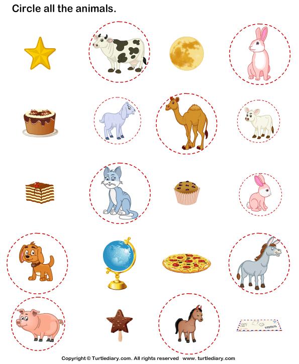Identify Animals Answer