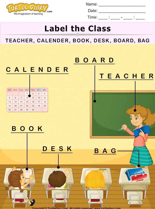 Picture Labeling Answer