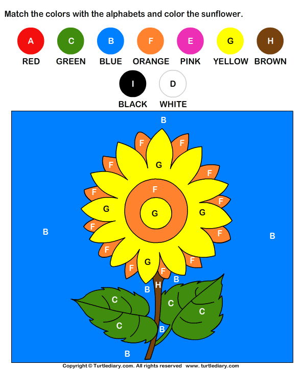 Color by Letter Answer