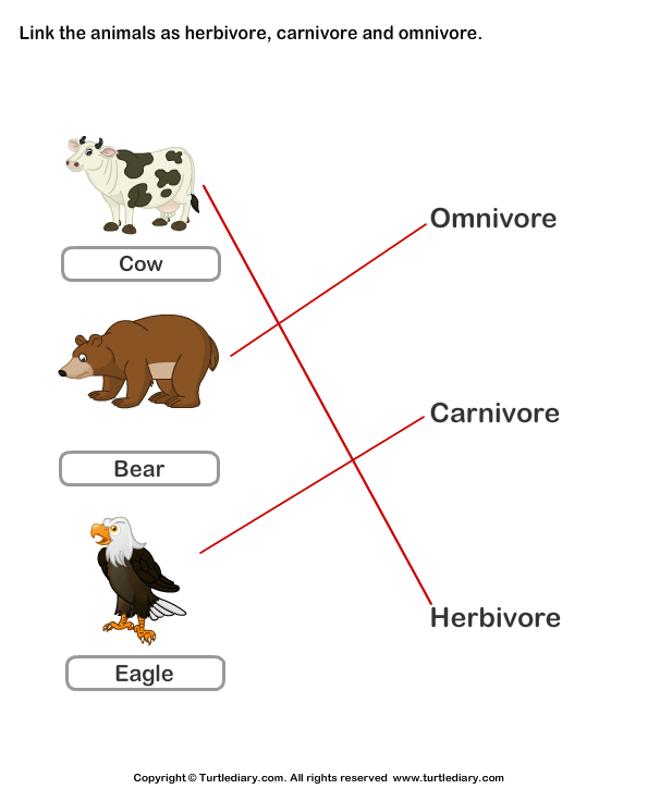 Identify Animals as Herbivore, Carnivore, or Omnivore Answer