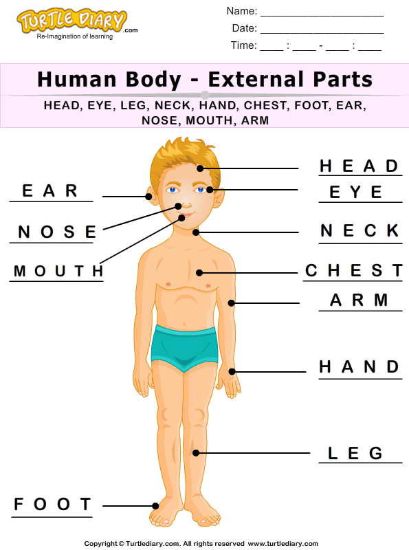 Label the Human Body Parts Answer