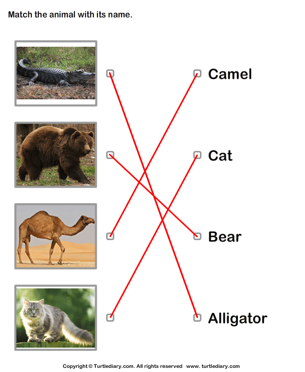 Match Animals to Their Names Answer