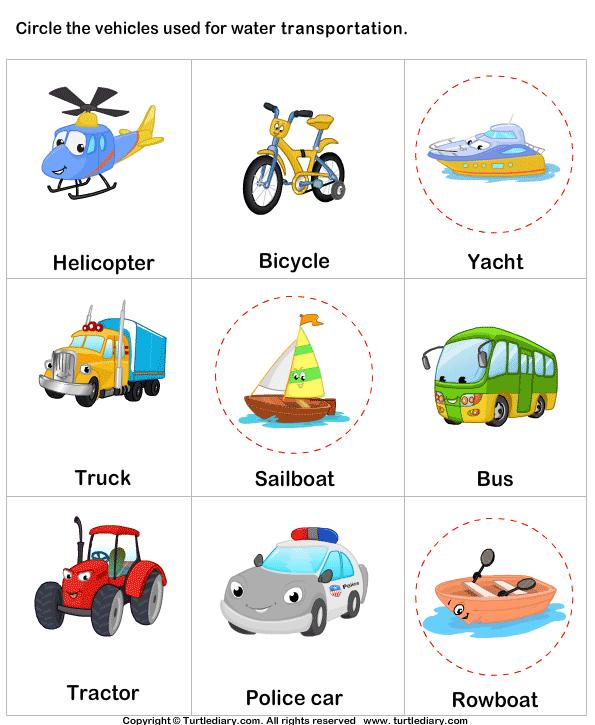 Water Transport Worksheet - Turtle Diary