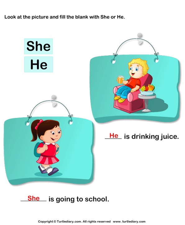 Using She or He Worksheet - Turtle Diary