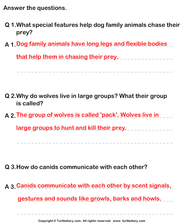 Dog Family - Answer the Questions Answer