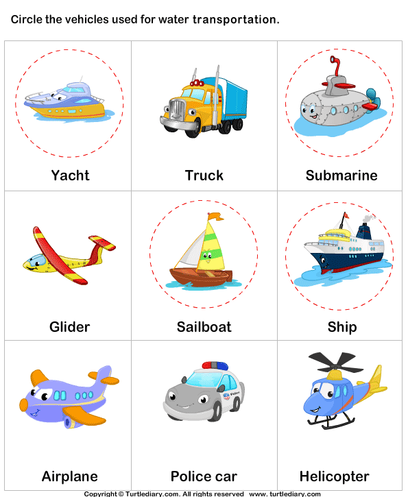 Water Transport Worksheet 3 - Turtle Diary