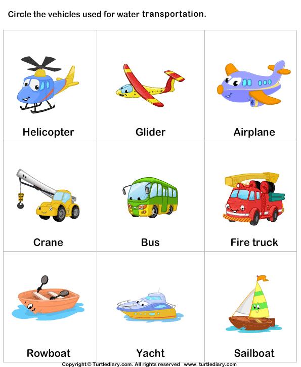 Water Transport 5 Worksheet - TurtleDiary.com