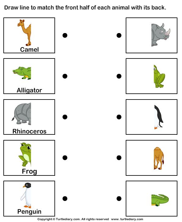 Animal Body Parts Worksheets on Frog Labeling Worksheet Kindergarten