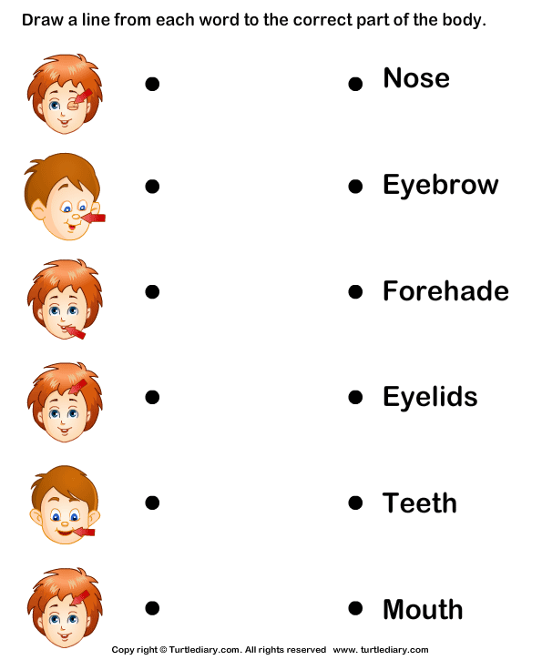 Body Parts To Words Worksheet - match body parts to words worksheet ...