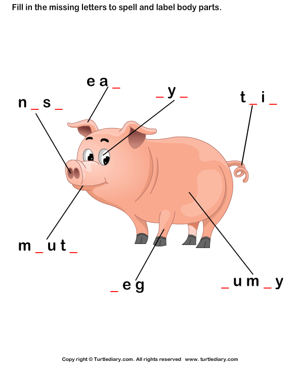 Body Parts of Pig Worksheet - Turtle Diary