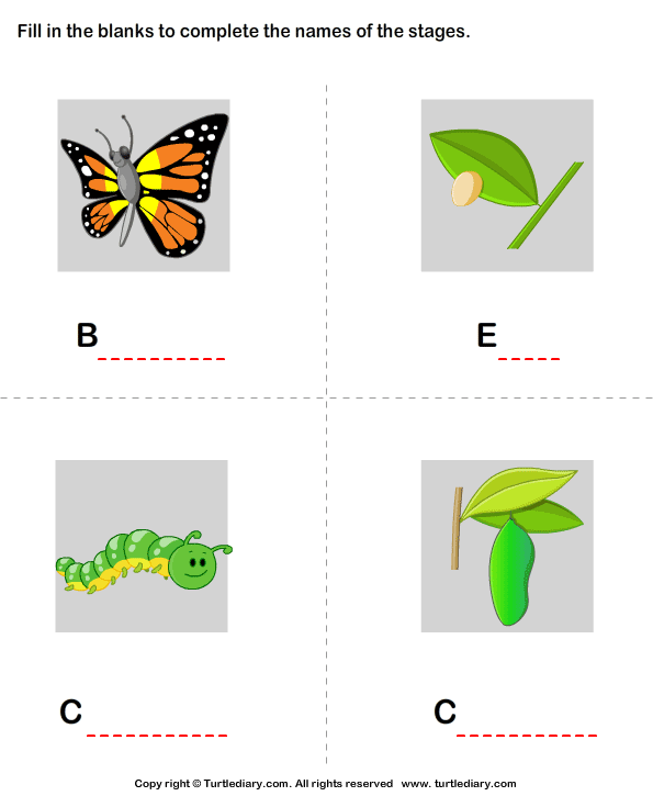Butterfly Life Cycle Stages Worksheet - Turtle Diary