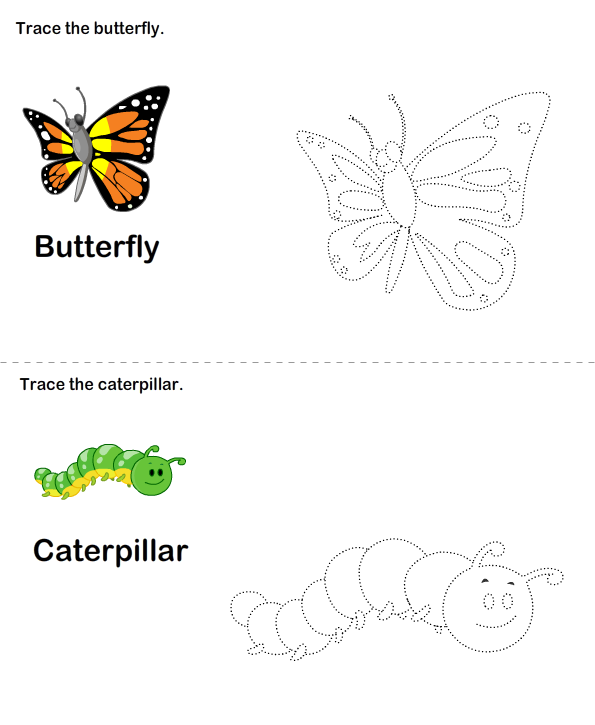 Butterfly Life Cycle Worksheet Worksheet Turtle Diary – Butterfly Cycle Worksheet
