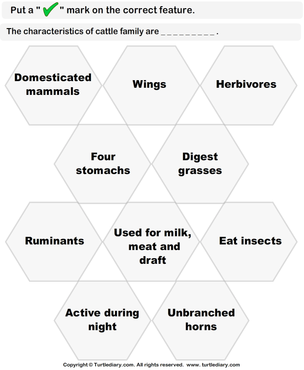 Identify Features of Cattle