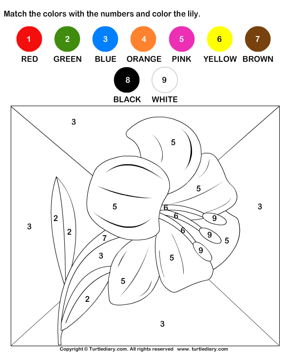 Color by Matching with Numbers Worksheet - Turtle Diary