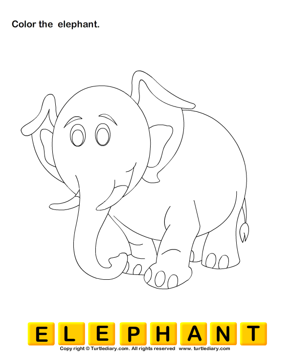 Color the Wild Animals