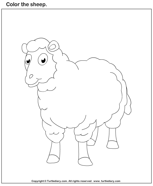 Color the Sheep Worksheet Turtle