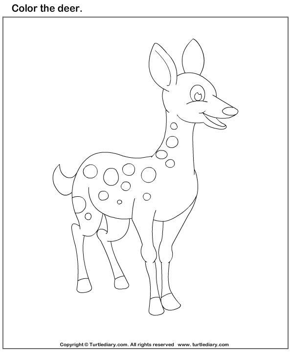 color the animals