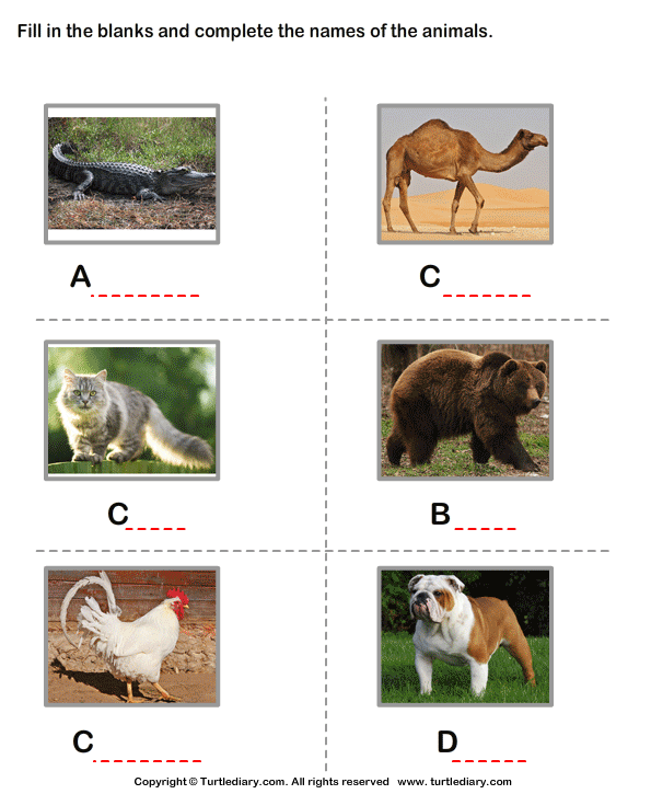 Write the Names of the Animals