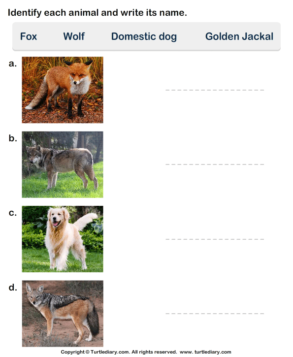 Write the Names of Dog Family Animals