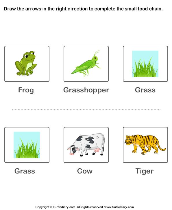 Food Chain Worksheet for Kids Worksheet - Turtle Diary