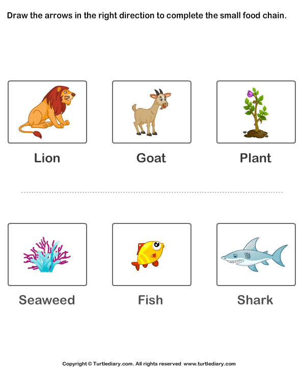 Food Chains for Kids W...