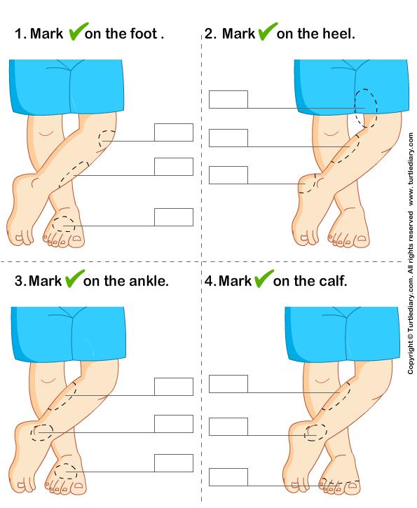 Identify Parts of Human Leg