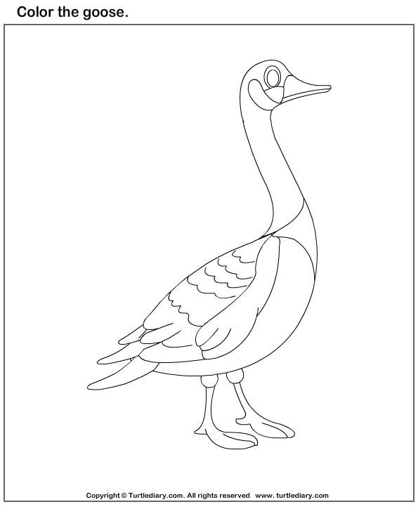 Goose s Worksheet - Turtle Diary