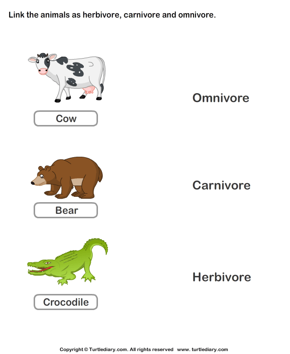 Herbivores Carnivores and Omnivores Animals Worksheet Turtle Diary – Herbivore Carnivore Omnivore Worksheet