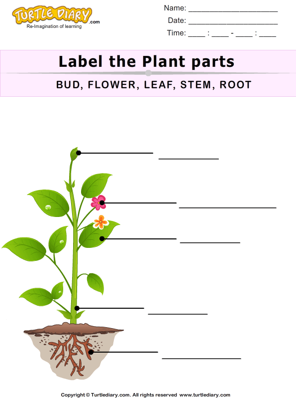 label the plant parts worksheet turtle diary. Black Bedroom Furniture Sets. Home Design Ideas