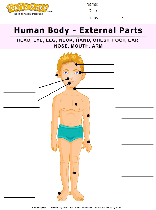 name of human body parts worksheet - turtle diary, Human body