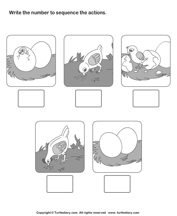 picture sequencing birth of a chicken worksheet turtle diary. Black Bedroom Furniture Sets. Home Design Ideas
