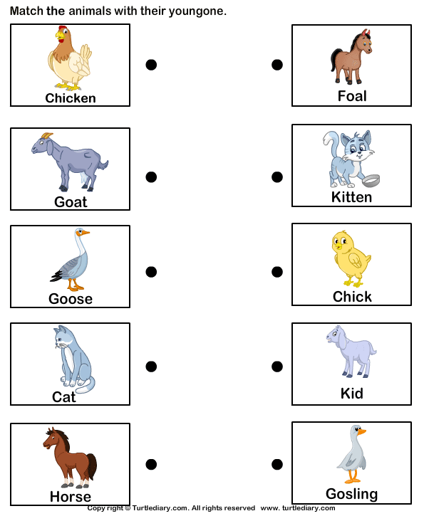 Pictures of Farm Animals and Their Babies Worksheet - Turtle