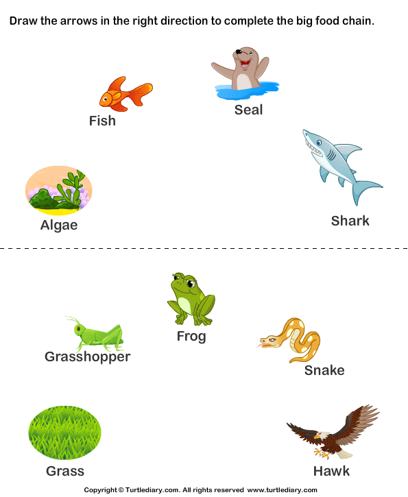 Complete the Food Chain - Fill in Arrows