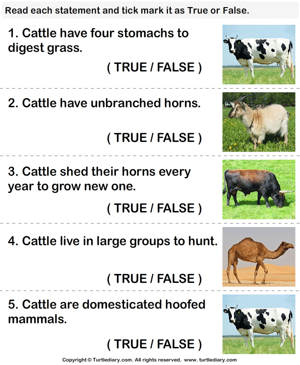 Cattle facts: True or false? - TurtleDiary.com