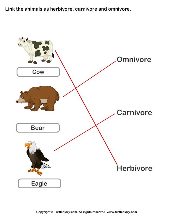 Identify animals as herbivore, carnivore, or omnivore ...