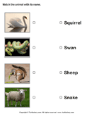 Match animals to their names 8