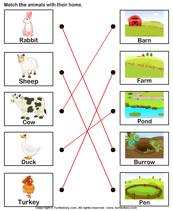 Match Farm Animals To Their Homes Worksheet 1 - Turtle Diary