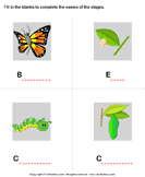 Butterfly life cycle: Complete the stage name - animals - Kindergarten