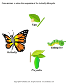 Sequence the stages of butterfly life cycle - animals - Kindergarten