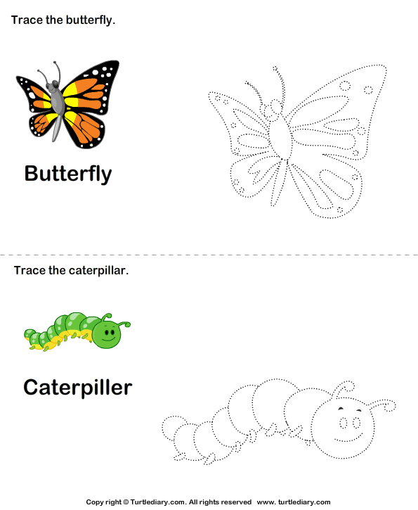 Trace the stages of the butterfly life cycle