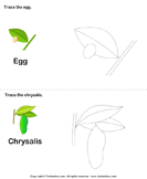 Trace the stages of the butterfly life cycle 2