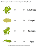 Frog life cycle: Match pictures with correct name